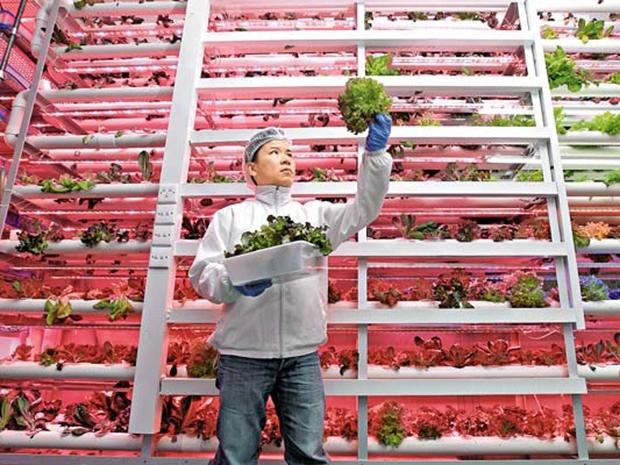 【信報專訊】再世「神農氏」 開墾廠廈農場 生產有機蔬菜