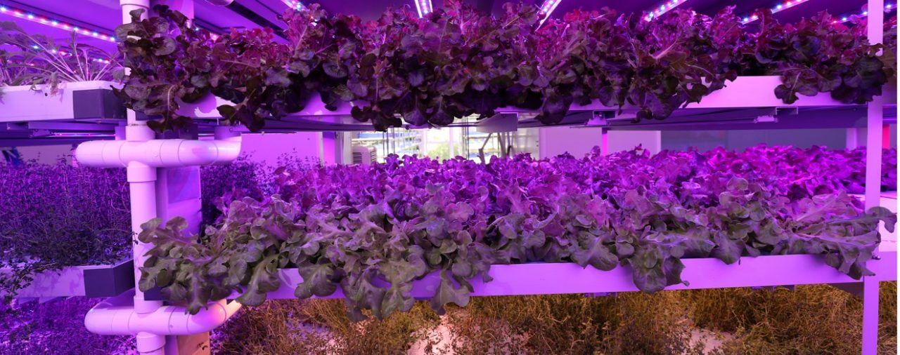 【SCMP】Inside Hong Kong's hi-tech vertical farm of the future