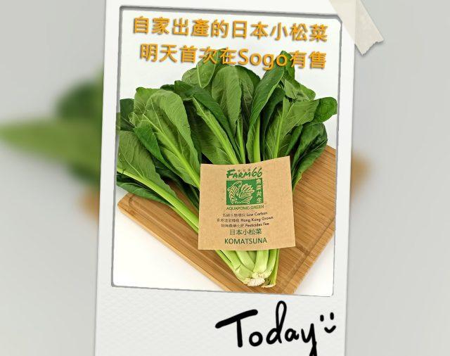 自家出產的日本小松菜Sogo售賣反應熱烈,已全部售罄👍😲,今天在Citisuper加推😉!